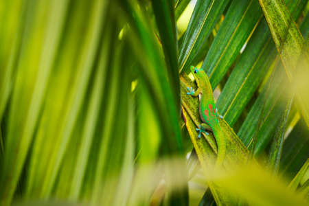 Exotic Green Tropical Lizard Hiding in Lush Fern photo