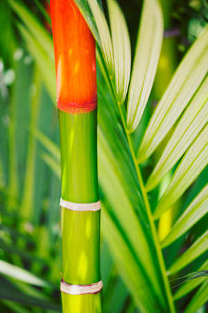 Vibrant Tropical Plants In Hawaii, Abstract Background photo