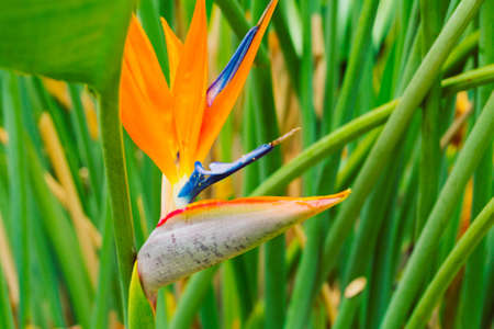heliconia: Vibrant Tropical Flower in Hawaii Stock Photo