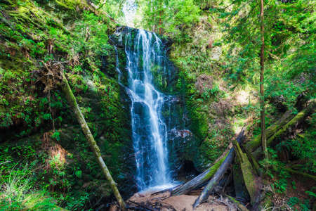 torrent: Beautiful Waterfall, Lush Waterfall in Forest