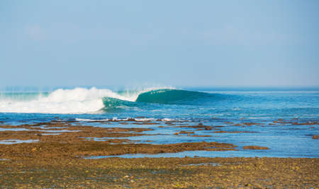 northshore: Perfect Surfing Wave on Tropical Island