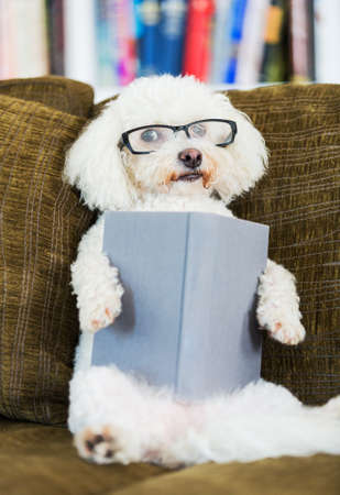 funny glasses: Cute Dog Reading Book at Home on Couch with Glasses