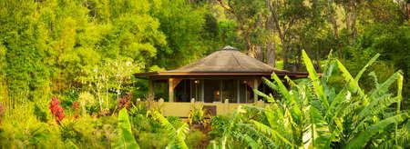 Tropical Cabin Retreat in the Jungle photo