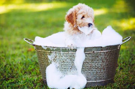 wash: Adorable lindo del perrito joven en el patio cubierto que toma un baño de burbujas jabonosas