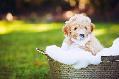 Filhote de cachorro adorável nova bonito fora na jarda que toma um banho coberto em bolhas ensaboadas