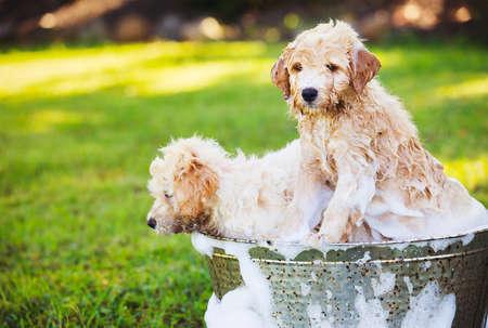 Filhotes adorável bonito no quintal de tomar um banho coberto em bolhas de sabão