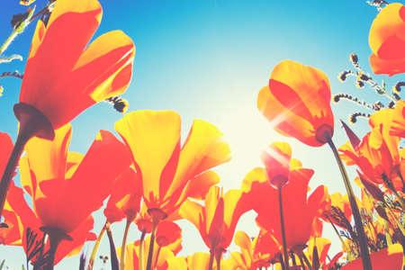 Beautiful Spring Flowers