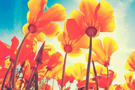 Mooie Lente Bloemen