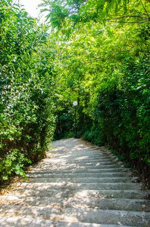bajando escaleras: Escaleras que van abajo rodeados de arbustos verdes Foto de archivo