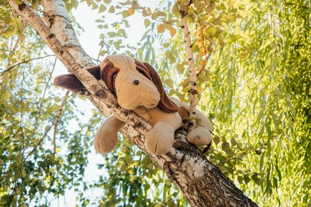 Dog looks sitting on the tree. The old stuffed toy dog, it weighs on the tree.