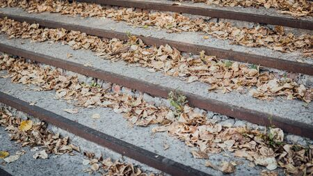 Stairs with autumn leaves. Stairs in the fall with leaves.