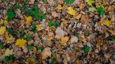 The texture of the fallen yellow leaves Imagens