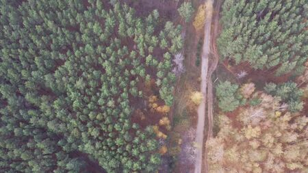Aerial photo country road between avenue of trees green forest Zdjęcie Seryjne