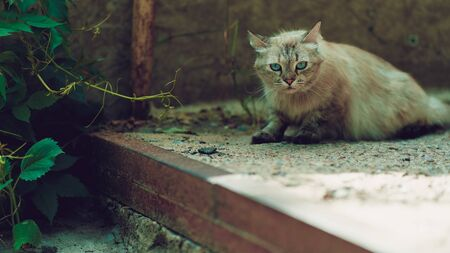 Stray cat walking on street, homeless pussycat outdoors