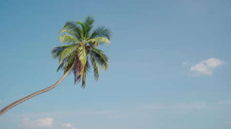 The palm tree on the background a sunny blue sky with the white clouds. Stok Fotoğraf