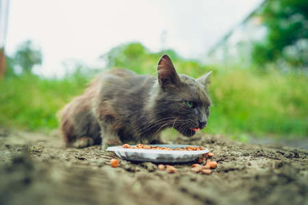 Close up of stray cat eating useful pet food. Concept of animal care.