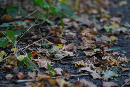 Close up of ground with fallen leaves in autumn season. Various dry foliage on ground in autumn forest.