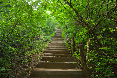 pathway: Stairway in the jungle  Stock Photo