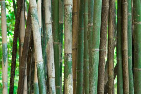 Background bamboo Stock Photo - 17205819