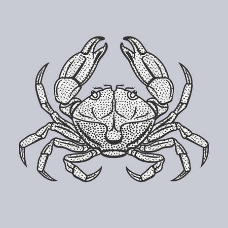 hardshell: Vector illustration of crab in vintage style isolated on a grey background. Illustration