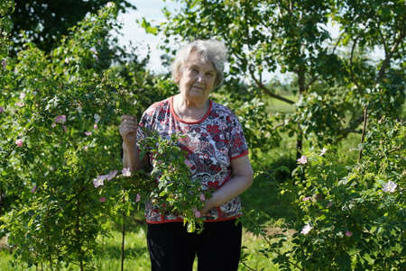 Portrait of old smiling woman dressed in t-shirt in the gargen in the background of growing trees in sunny summer day. Woman is charged energy of nature