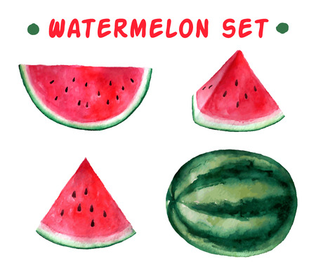 Watermelon: Vector watercolor hand drawn watermelon set. Organic food illustration.