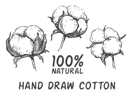 Vector conjunto de drenaje de la mano planta de algodón de tinta. Ilustración de grabado. Se puede utilizar como ellement decoración para una boda rústica o tarjetas de felicitación