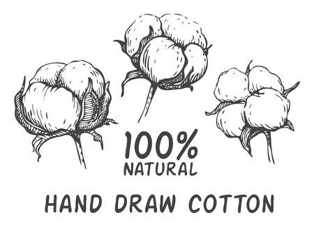 black and white line drawing: Vector set of hand draw ink cotton plant. Engraving illustration. Can be used as decor ellement for a rustic wedding or greeting cards