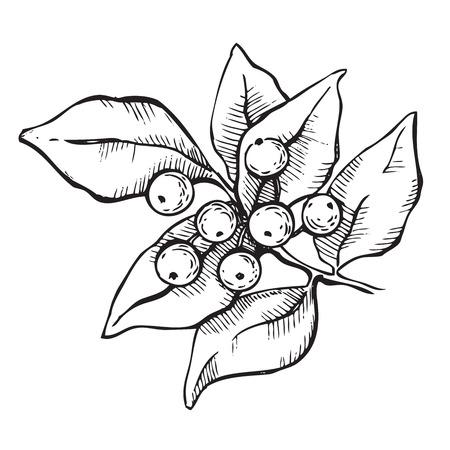 Vector hand-draw mistletoe ink illustation. Illustration