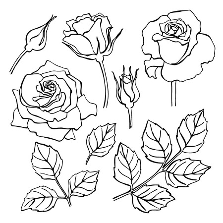 leaf line: Vector set of hand-draw line rose collection. Flower and leaf illustration. Great for wedding invitation and greeting cards Illustration