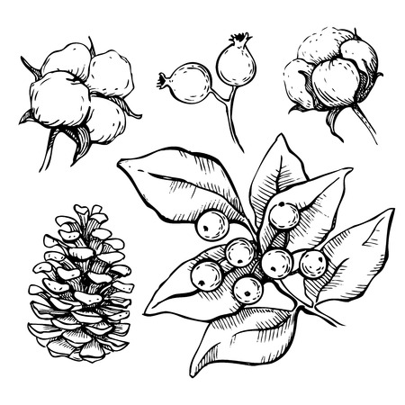 muerdago: Vector conjunto de dibujado a mano, las plantas de decoraci�n tradici�n de Navidad. Grande para las tarjetas de invitaci�n y de felicitaci�n