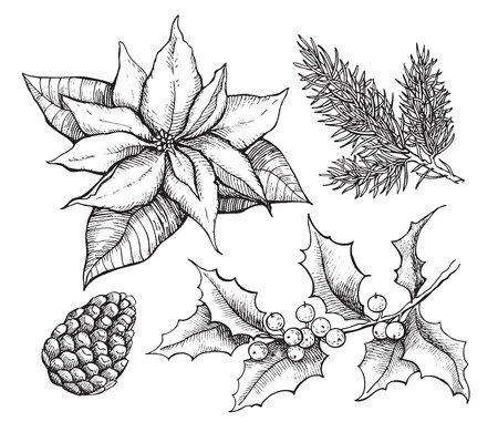 houx: Vector vintage set d'dessin� � la main, d�coration plantes tradition de No�l. Id�al pour les invitations et cartes de souhaits