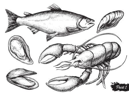 calamar: Vector dibujado a mano conjunto de mariscos. Ilustración de la vendimia Vectores