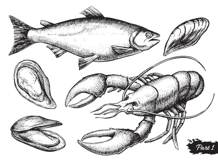 fish store: Vector hand drawn seafood set. Vintage illustration