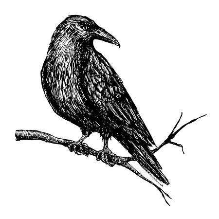 Vector vintage raven on tree branch. Hand drawn  illustration.