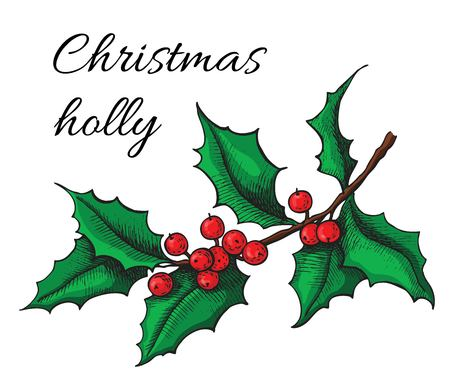 retro christmas: Hand drawn Holly. Christmas mistletoe plant. Christmas and holiday decor. Illustration
