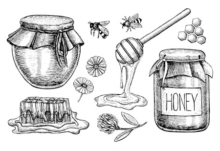 jars: Vector honey set. Vintage hand drawn illustration. Engraved organic food Illustration