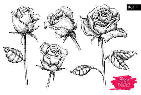 Vector mano botanico redatto rosa set. Collezione inciso. Grande per greating schede, gli sfondi, gli inviti di nozze Archivio Fotografico - 48130869