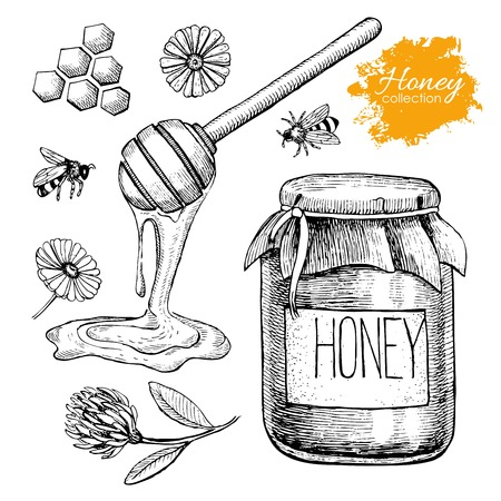 Vector honey set. Vintage hand drawn illustration. Engraved organic food Vettoriali