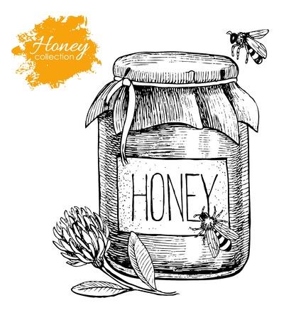 miel de abeja: Vector ilustración de la vendimia de miel. Dibujado a mano. alimentos orgánicos grabado. Grande para el negocio promoción