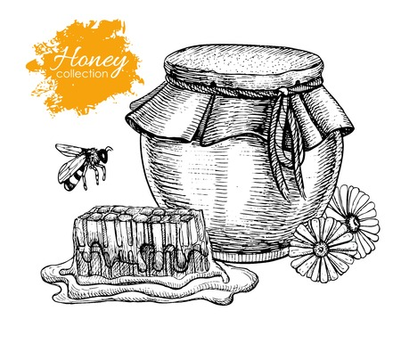 promote: Vector honey vintage illustration. Hand drawn. Engraved organic food. Great for business promote