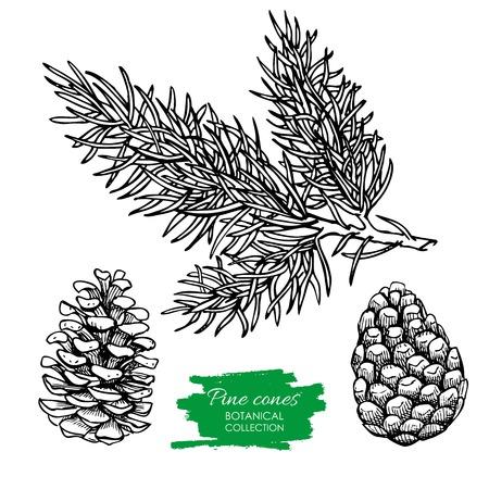 evergreen branch: vector dibujado a mano cono de pino y botánica rama. colección de grabado. Ideal para tarjetas de felicitación, fondos, decoración de fiestas
