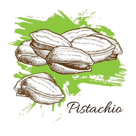 pistachios: Vector hand drawn Pistachios illustration. Engraved collection. Illustration