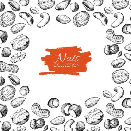 brazil nut: Vector hand drawn nuts illustration. Engraved. Great for your business promote