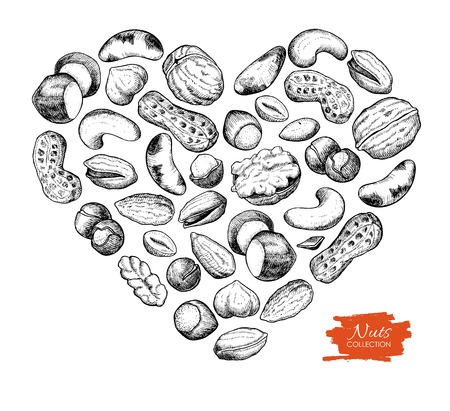 pinoli: Vector hand drawn nuts illustration in heart shape. Engraved. Nuts love for your business promote