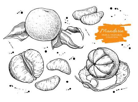 Vector hand drawn mandarin set. Engraved collection.