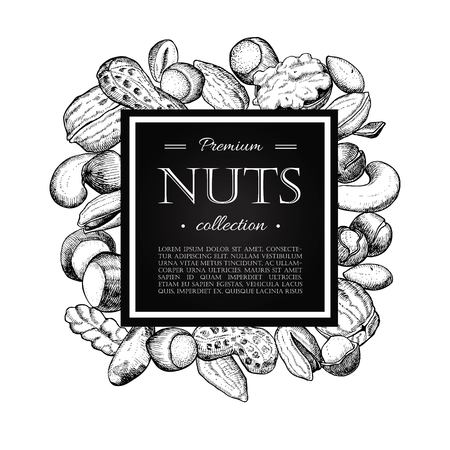 macadamia: Vector hand drawn nuts illustration. Engraved. Great for your business promote