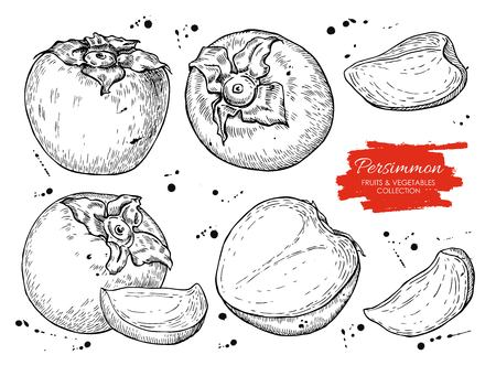 persimmon: Vector hand drawn persimmon set. Engraved collection.