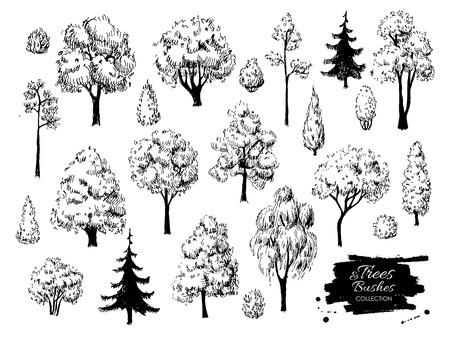 Big set of hand drawn tree sketches. Artistic drawing.
