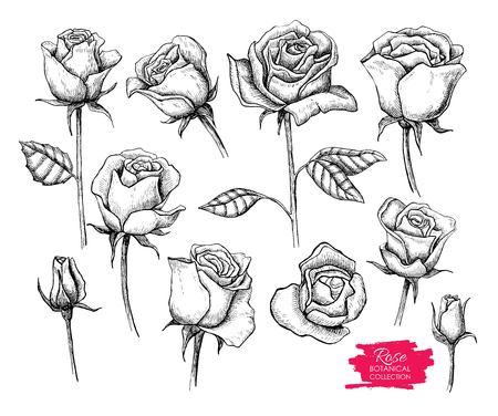 botanical rose set. Engraved collection. Great for greating cards, backgrounds, wedding invitations